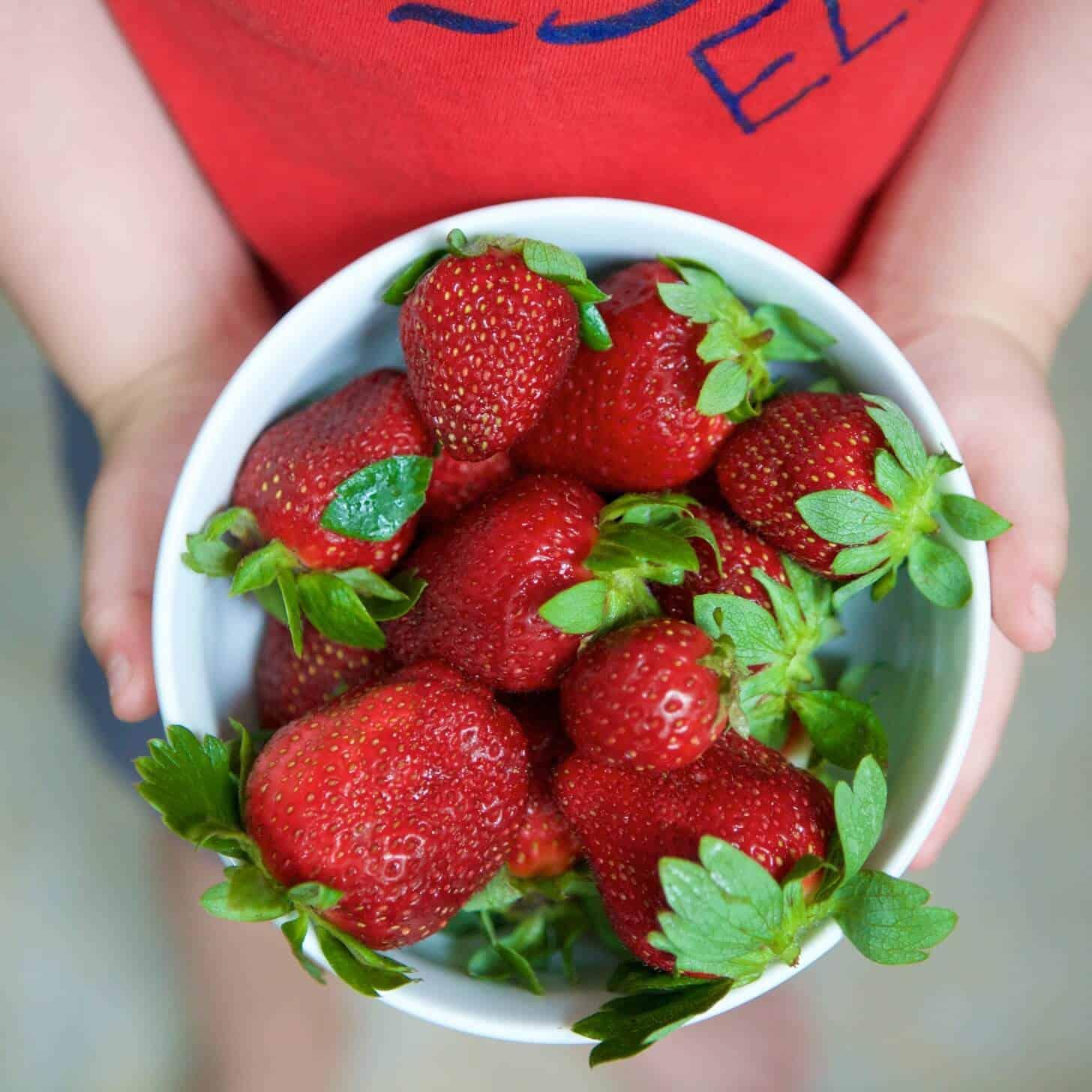 Chocolate Strawberry Breakfast Muffins