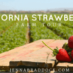 California Strawberry Farm Tour
