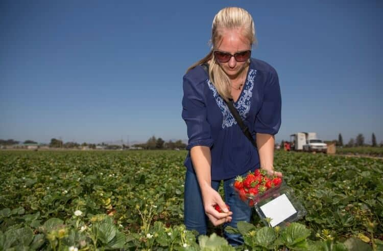 California Strawberry Commission bloggers farm tour 2015. #MakeHealthyEasy via @JBraddockRD