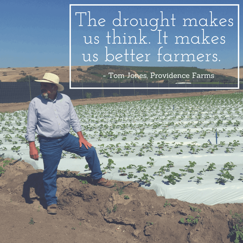 Quote from Strawberry Farmer about the California drought 2015