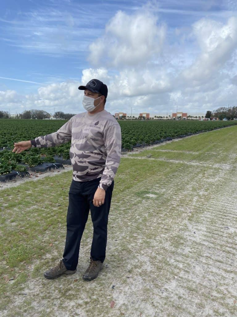 why buying florida produce matters - florida strawberry farm