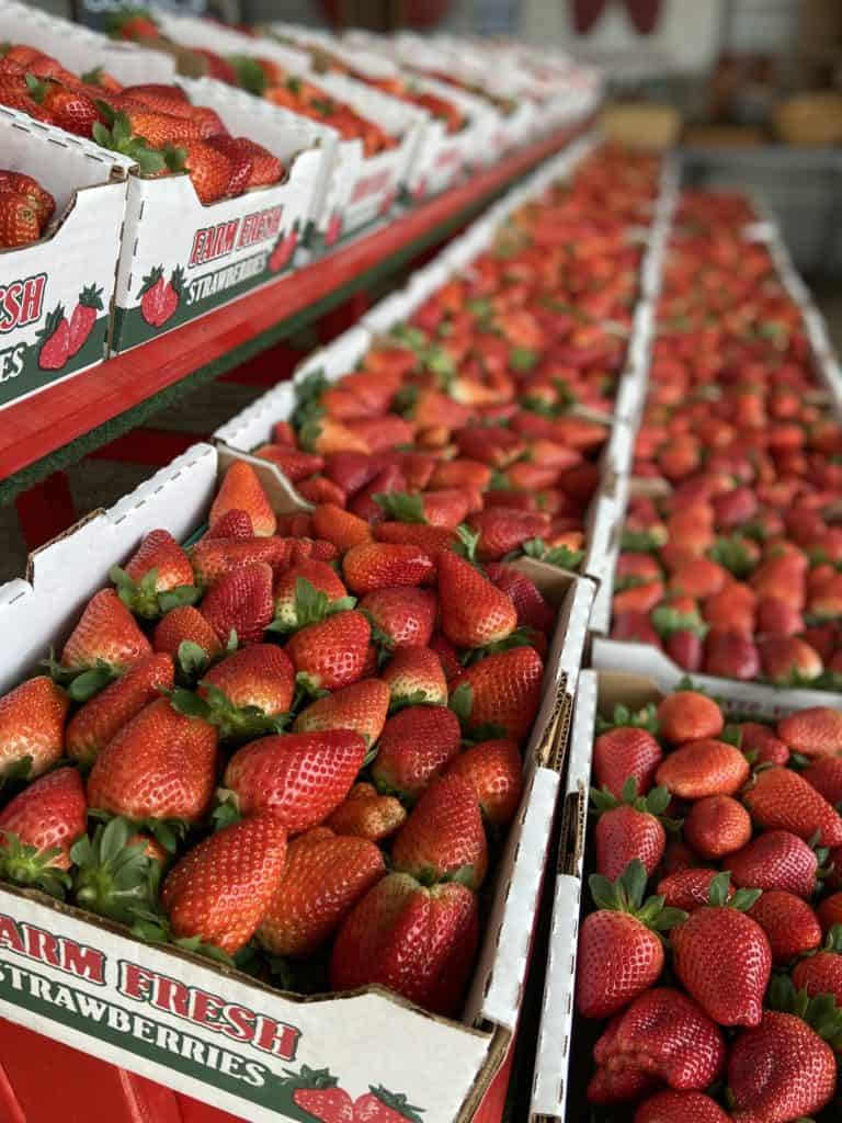 why buying florida produce matters - florida strawberries