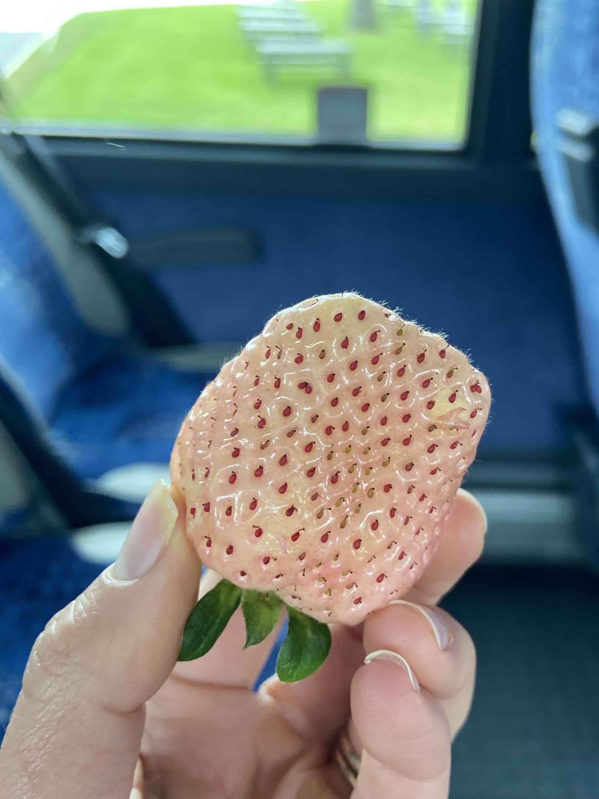 wish farms pineberries